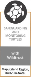 SAFEGUARDING AND MONITORING TURTLES with Wildtrust